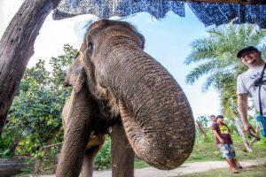 elephants world kanchanaburi review