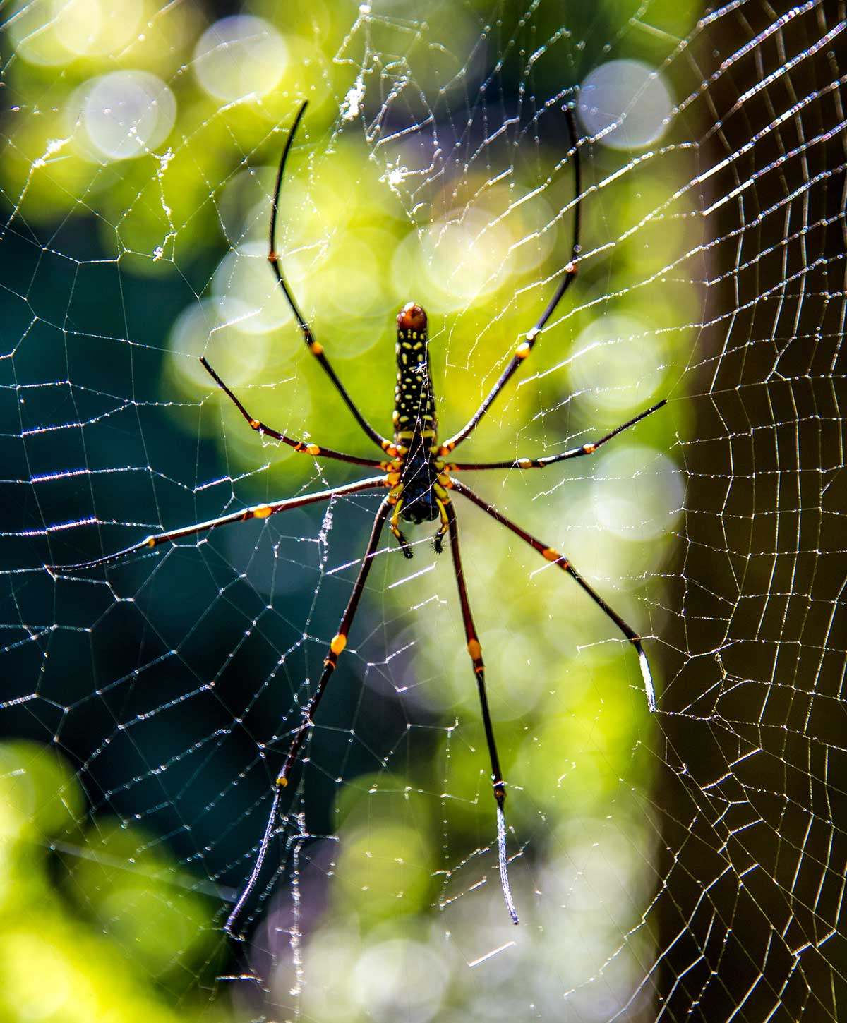 hiking thailand spiders