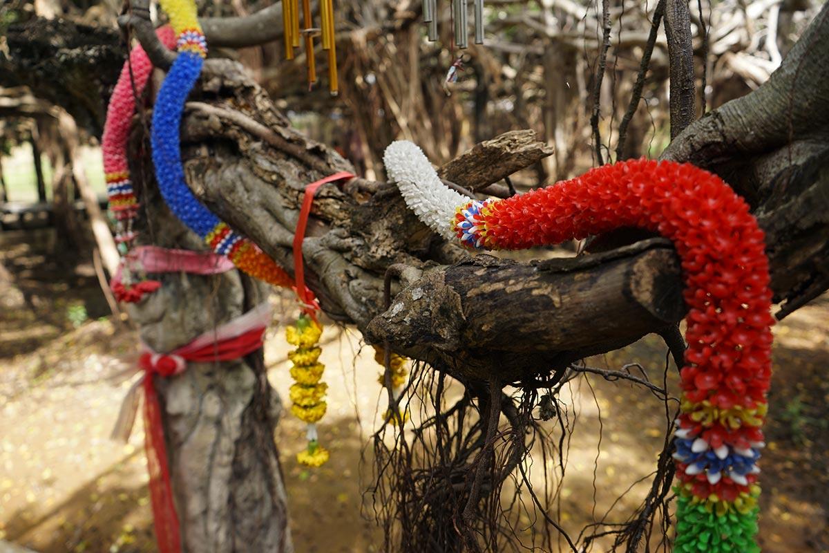 phimai banyan tree tour