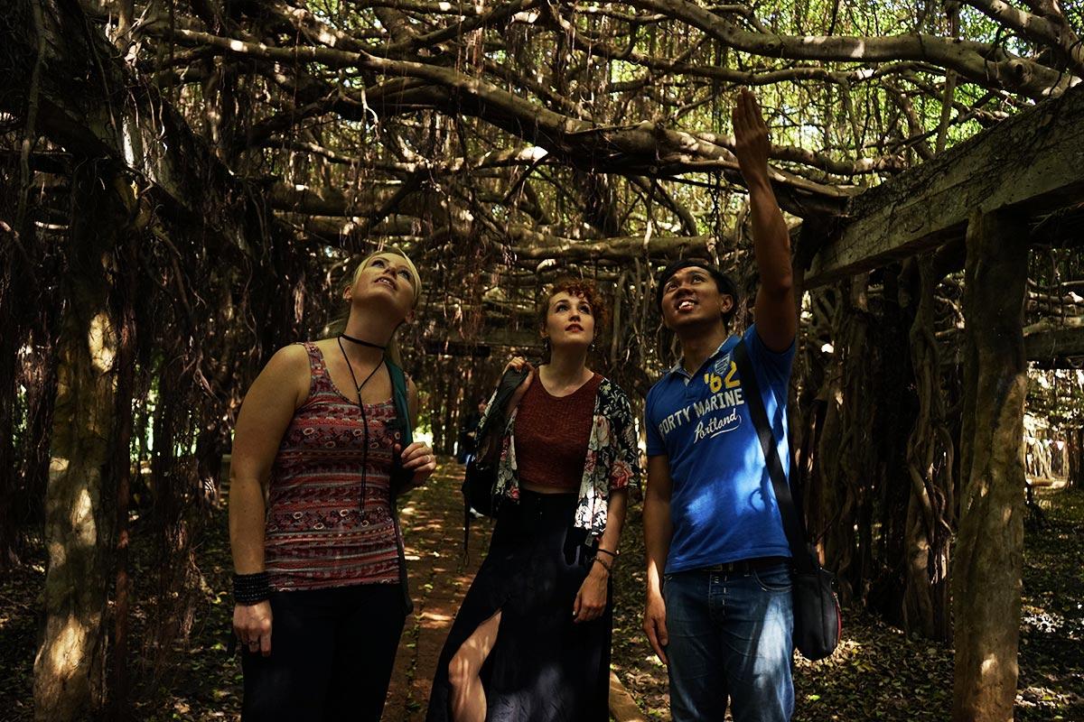 phimai baynan tree grove