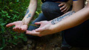 chiang mai stick bug