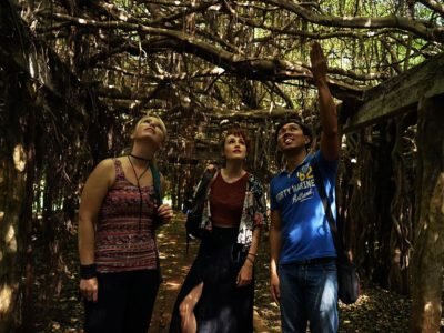 Phimai's Mystical Banyan Tree Forest